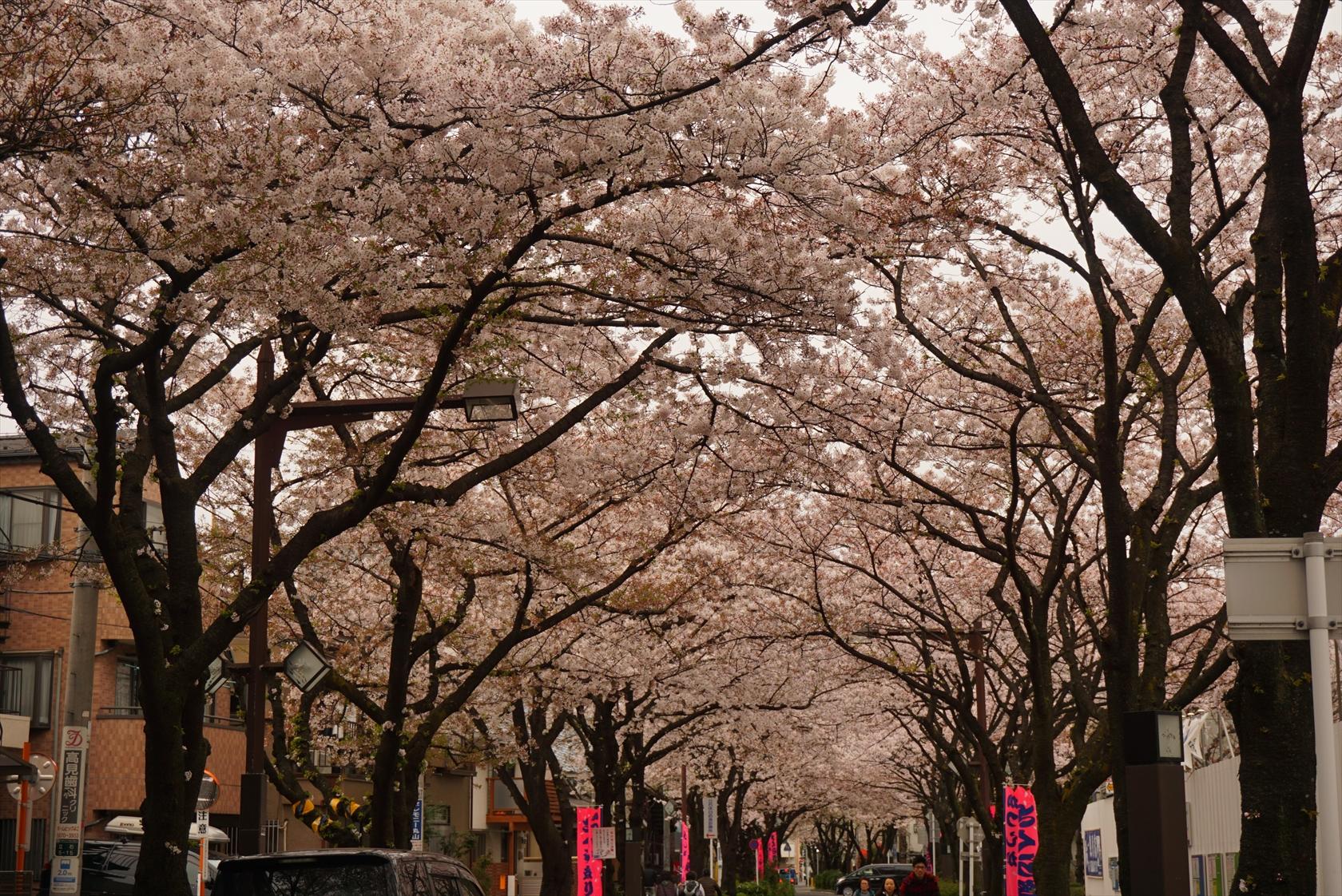 おまかせオート+マイフォトスタイルで桜撮影