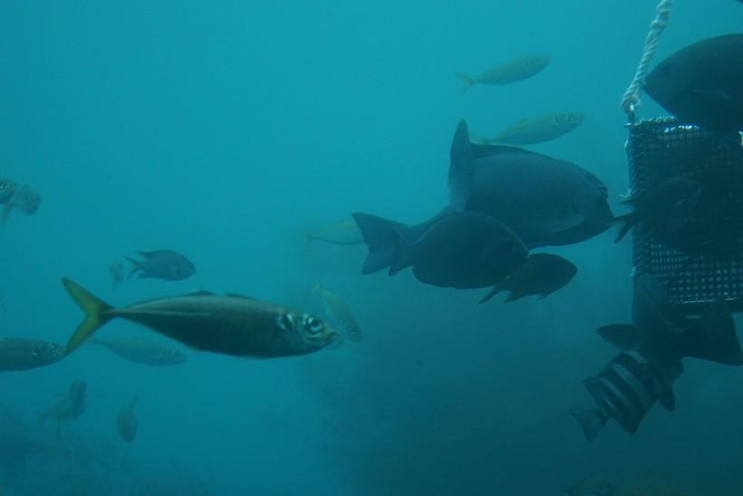 海中公園 魚群